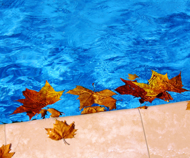 Des feuilles mortes sont sur une piscine